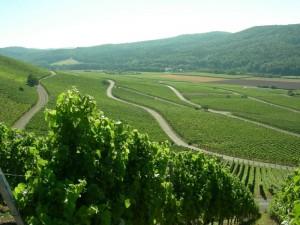 Weinberge Weinstrasse